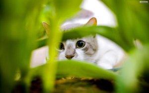 gato free